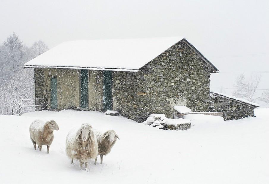 Let is snow, Let is snow, Let is snow. Merry Christmas by Prodir